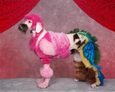 crazy dog grooming (5)