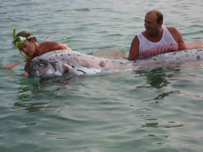 giant oarfish 2