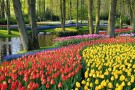 Keukenhof The Largest Flower Garden In The World