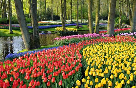 Keukenhof The Largest Flower Garden In The World