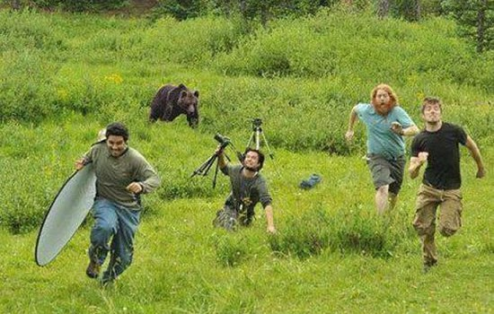 When Wildlife Photography Goes Wrong