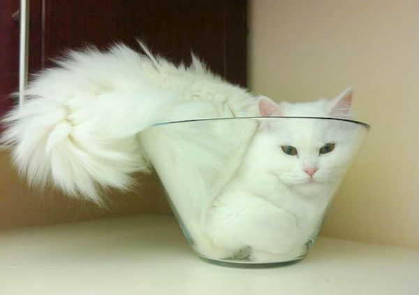 10 Cats That Think They Are Liquid 2
