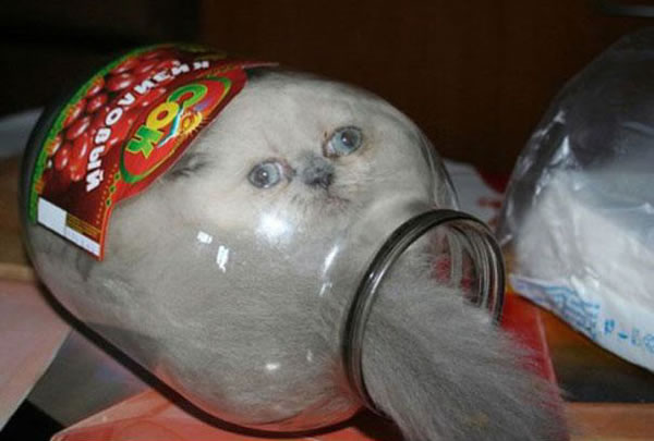 10 Cats That Think They Are Liquid 3