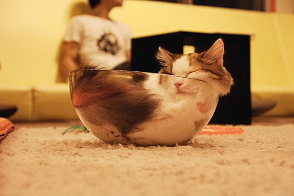 10 Cats That Think They Are Liquid 4