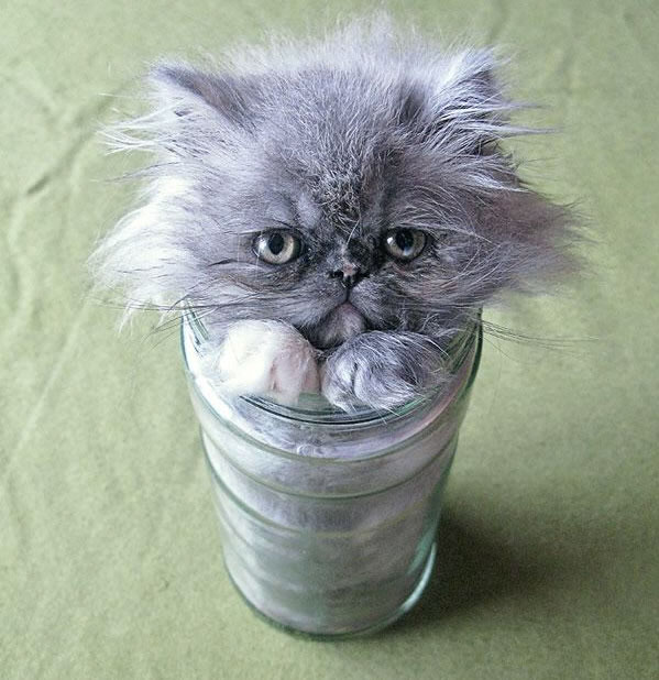 10 Cats That Think They Are Liquid 5