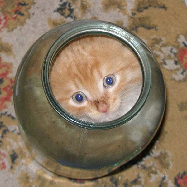 10 Cats That Think They Are Liquid 6