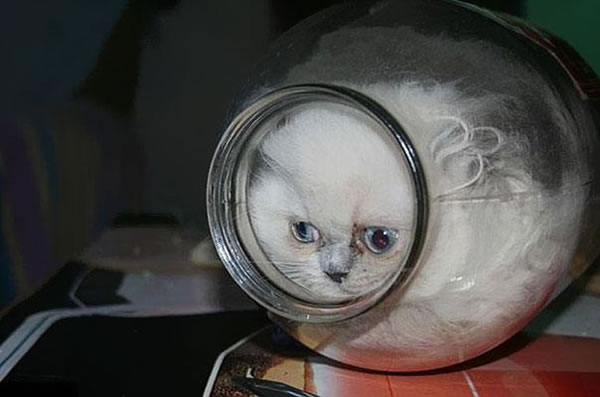 10 Cats That Think They Are Liquid 9