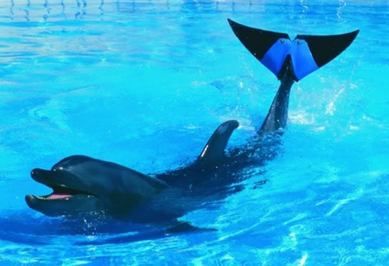 Amazing Prosthetic Limbs For Animals 8