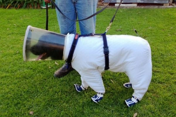 Dog Beekeeping Suit For Dogs Working On Bee Farms