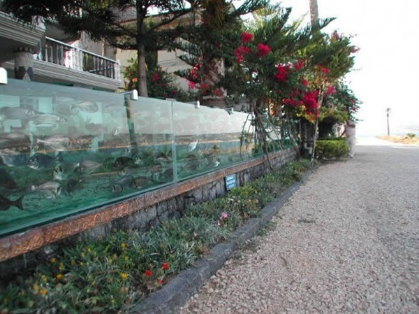 Eccentric Millionaire Builds Aquarium Fence Around His Mansion  2