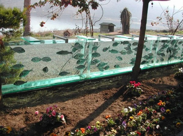 Eccentric Millionaire Builds Aquarium Fence Around His Mansion  3