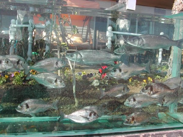 Eccentric Millionaire Builds Aquarium Fence Around His Mansion  4