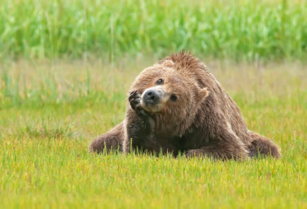 Pictures Of Bears Chilling And Thinking About Life 1