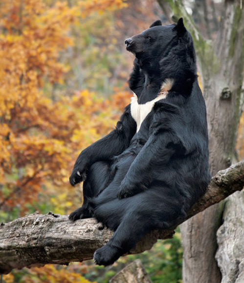 Pictures Of Bears Chilling And Thinking About Life 11