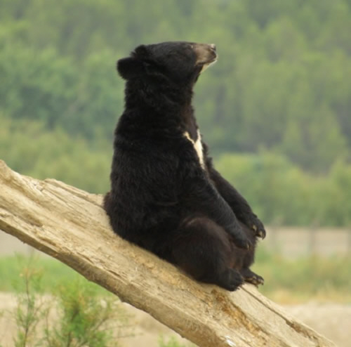 Pictures Of Bears Chilling And Thinking About Life 12