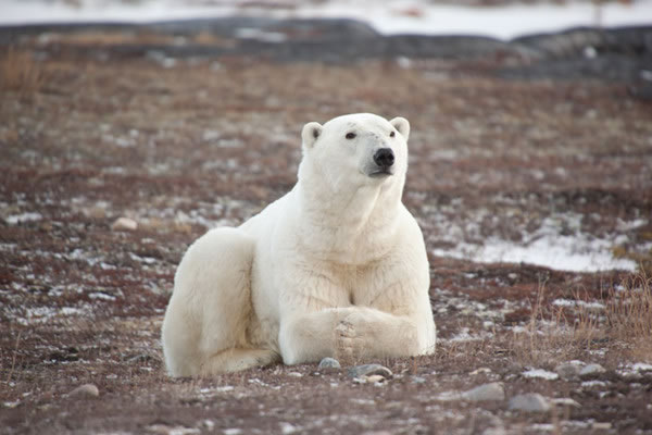 Pictures Of Bears Chilling And Thinking About Life 14