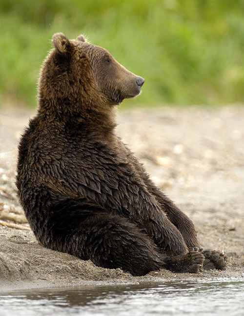Pictures Of Bears Chilling And Thinking About Life 15
