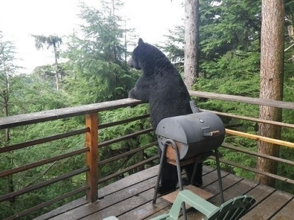 Pictures Of Bears Chilling And Thinking About Life 2