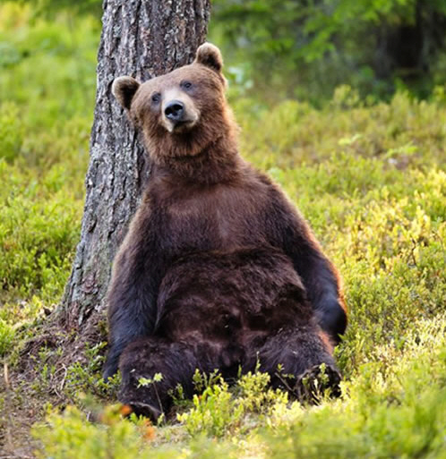 Pictures Of Bears Chilling And Thinking About Life 4