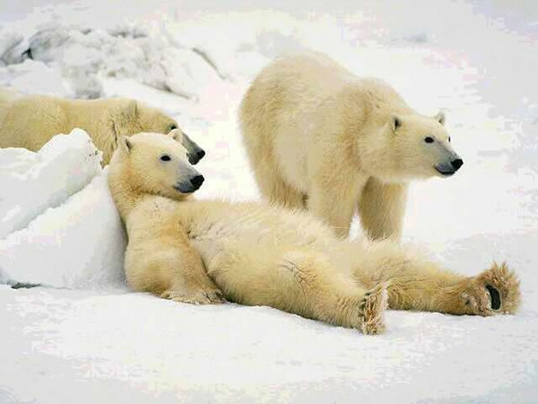 Pictures Of Bears Chilling And Thinking About Life 5