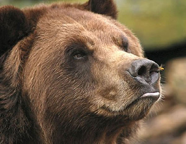 Pictures Of Bears Chilling And Thinking About Life 6