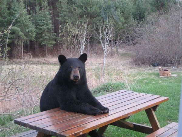 Pictures Of Bears Chilling And Thinking About Life 7