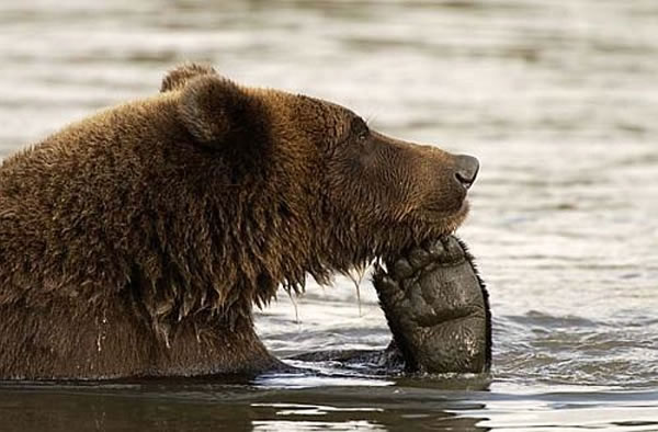 Pictures Of Bears Chilling And Thinking About Life 9