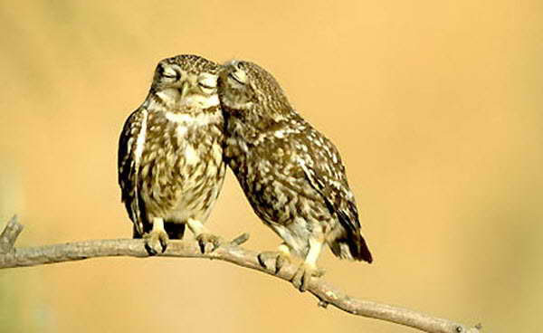 Pictures Of Love In The Animal World 1
