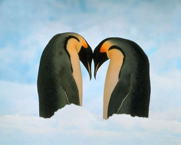 Pictures Of Love In The Animal World 6