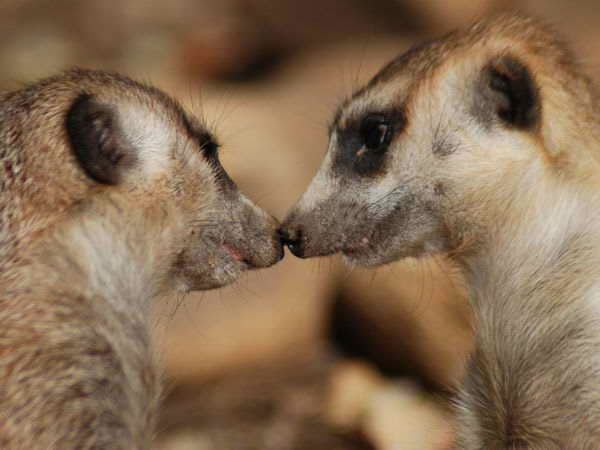 Pictures Of Love In The Animal World 8