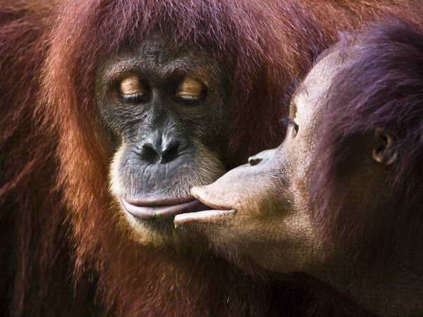 Pictures Of Love In The Animal World 9