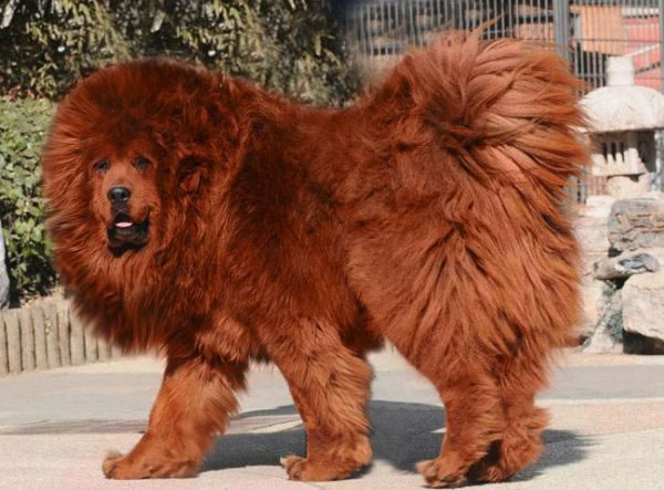 10 Rare Dog Breeds You Probably Never Knew Existed