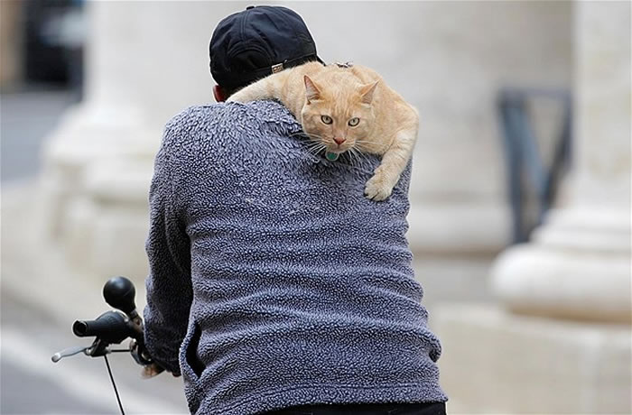 animals hitching a ride (6)