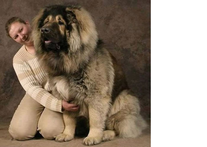 big dog breeds