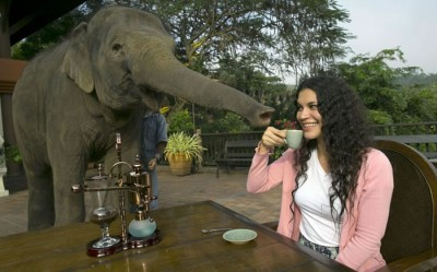 Most Expensive Coffee In The World Black Ivory Made From Elephant Poo