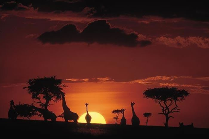 national geographic africa (14)