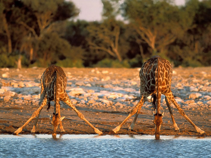 national geographic africa (23)