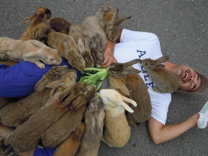 okunoshima rabbit island (1)