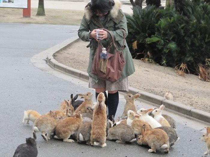 okunoshima rabbit island (10)