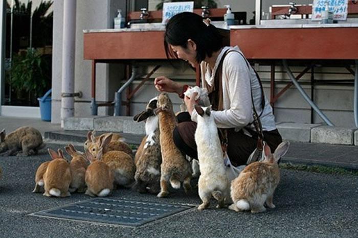 okunoshima rabbit island (2)