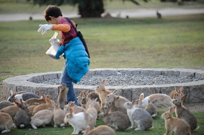 okunoshima rabbit island (4)
