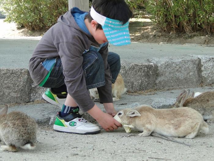 okunoshima rabbit island (5)
