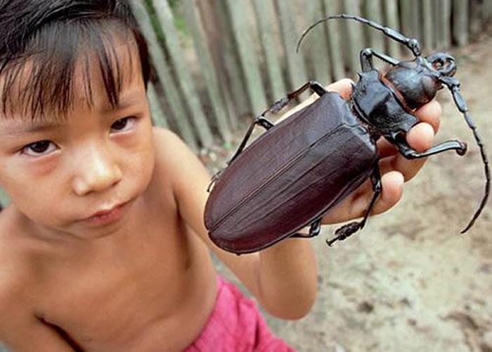 titan beetle 1