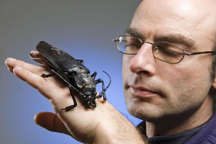 titan beetle 4