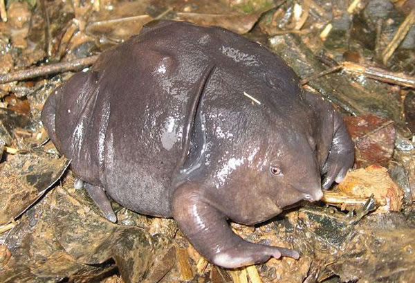 21 More Weird Animals You Never Knew Existed 17