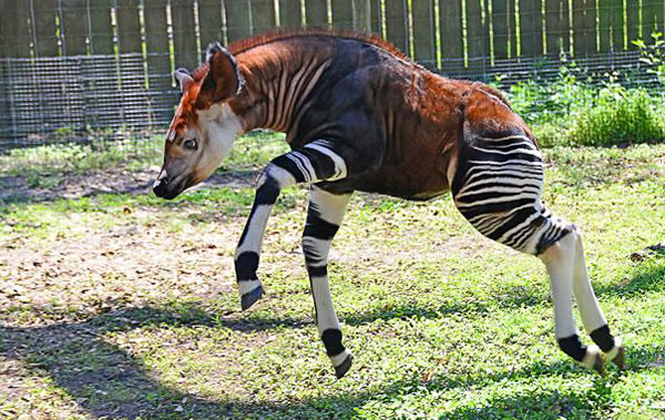 21 More Weird Animals You Never Knew Existed