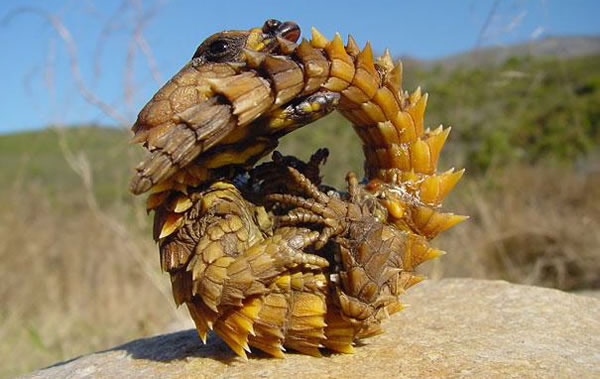 21 More Weird Animals You Never Knew Existed 21