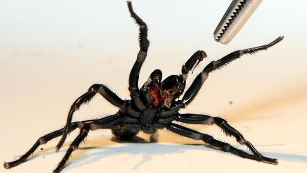 Creepy Things About Spiders 10