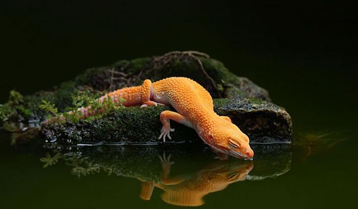Beautiful Creatures 21 Amazing Gecko Close Ups