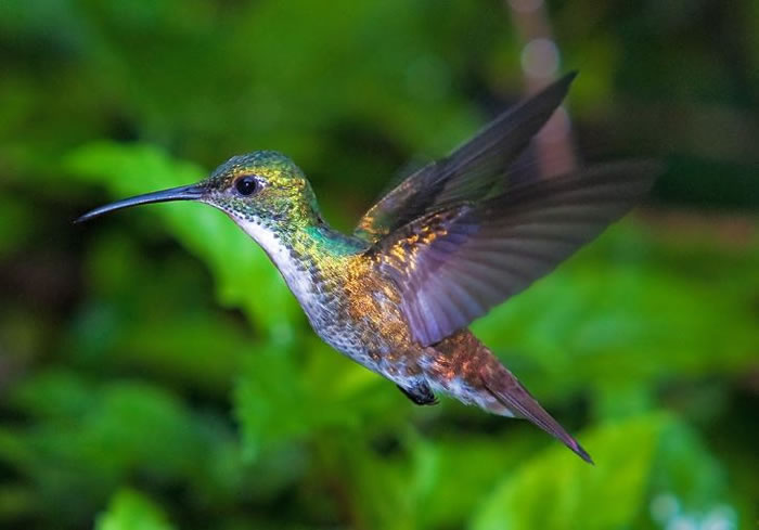 beautiful creatures - humming bird (1)